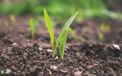 Per una agricoltura della vita, ad alta intensità di conoscenza e relazioni
