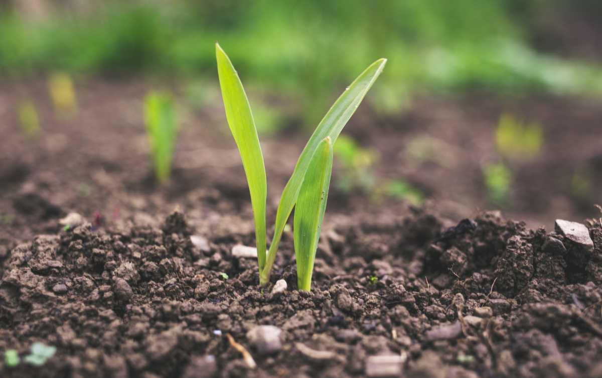 Agricoltura per la vita